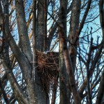 bird's nest at Dia: